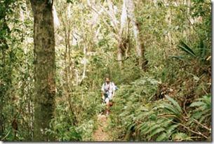 trilha-entre-praia-do-leste-e-parnaioca-2