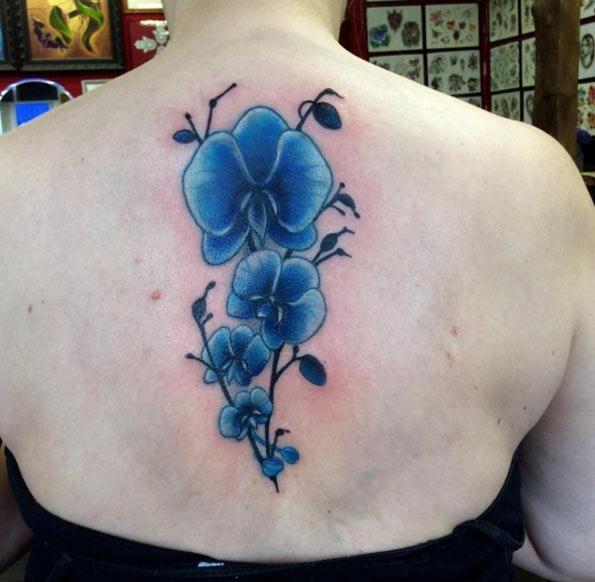 Este belo floral costas