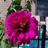 Gardening 2011 - 100_9953.JPG