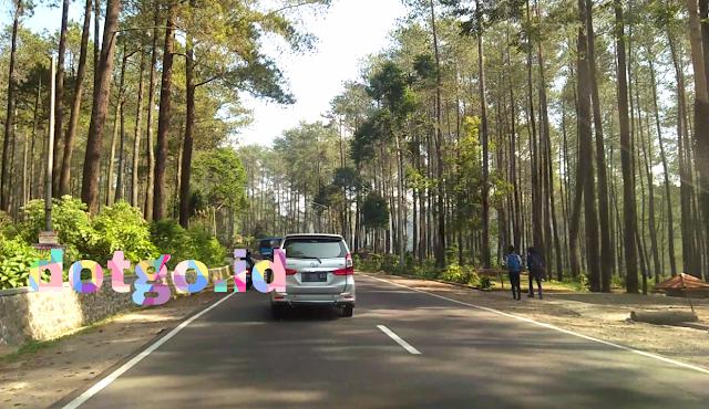 Hutan pinus tempat bersantai yang nyaman di sekitar gunung tangkuban parahu
