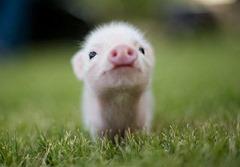 Cute-animals-1