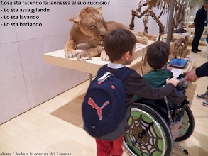 Photo: http://pollon72.blogspot.it/2014/01/il-museo-delle-scienze-di-trento-di.html
