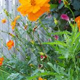 Gardening 2012 - 115_2414.JPG