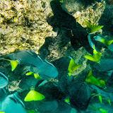galapagos - Galapagos_FB-127.jpg