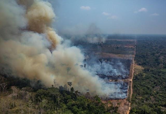 La Amazonia pierde millones de toneladas de carbono debido a la deforestación