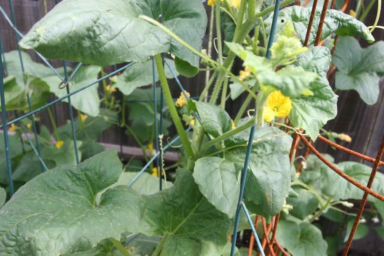 Gardening 2012 - IMG_3753.JPG