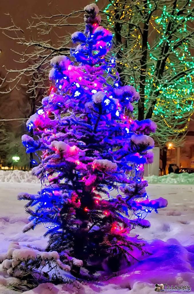 22 декабря 2011 года - одна из многих мелких елок возле администрации