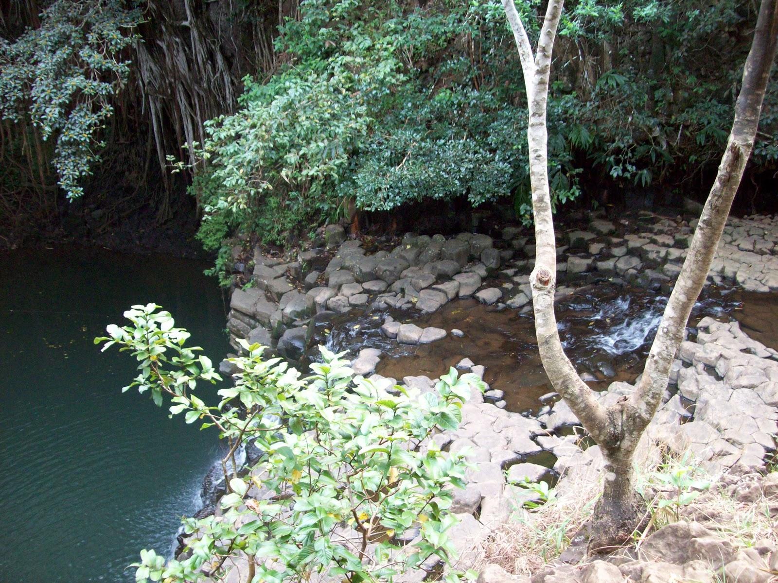 Hawaii Day 5 - 114_1394.JPG