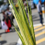 Palm Sunday - IMG_8647.JPG