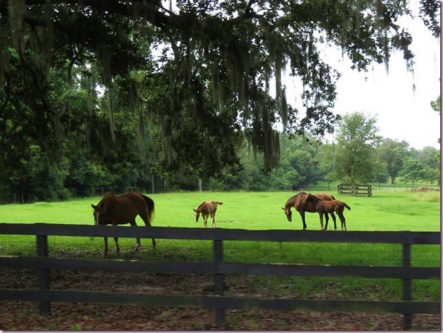 horsesIMG_6876