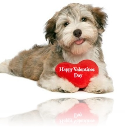 135137092-dog-valentines-day-date-632x475-300x225