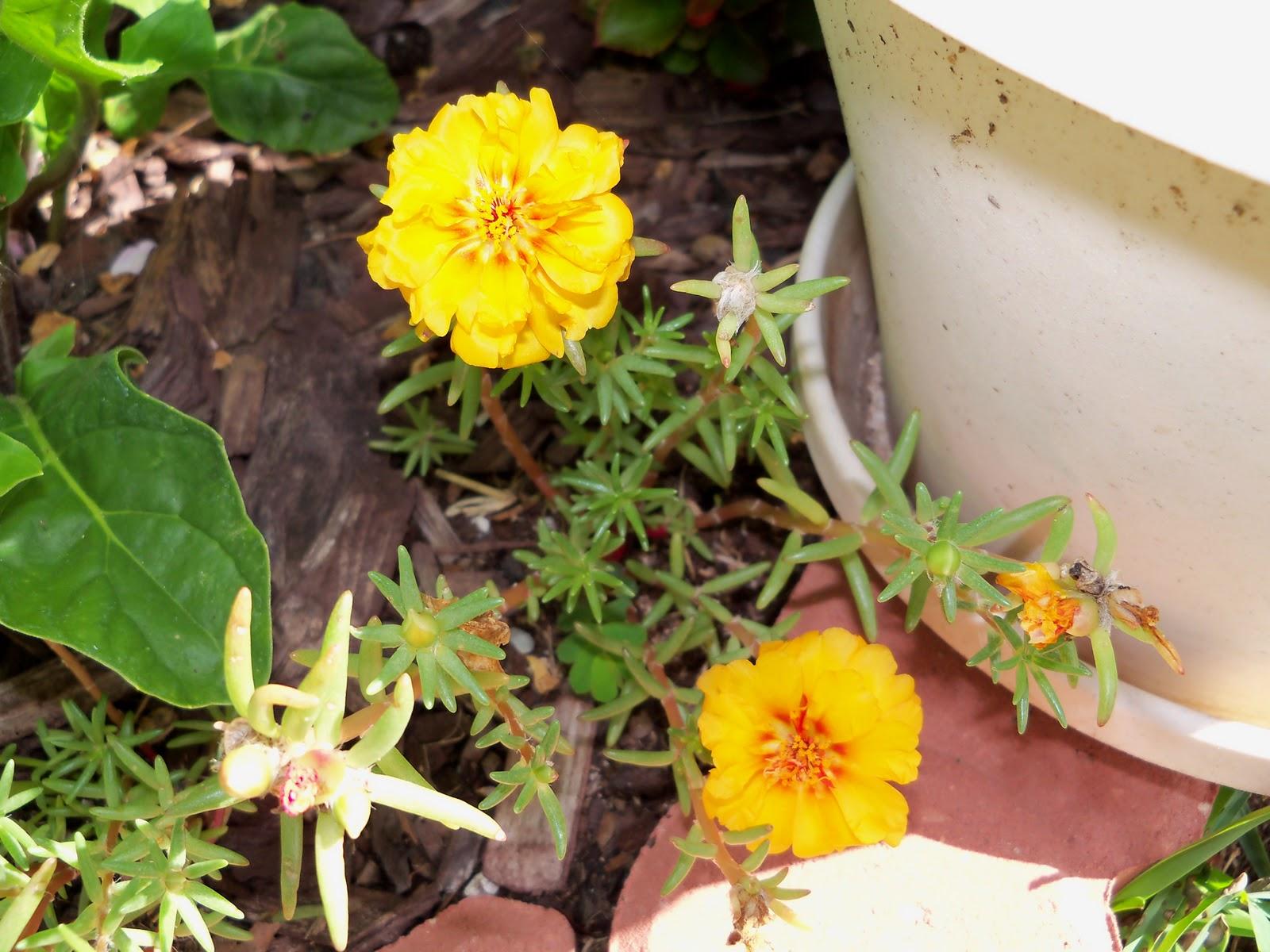 Gardening 2010, Part Three - 101_3685.JPG