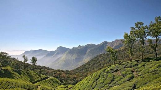 Kerala, India: tea plantation