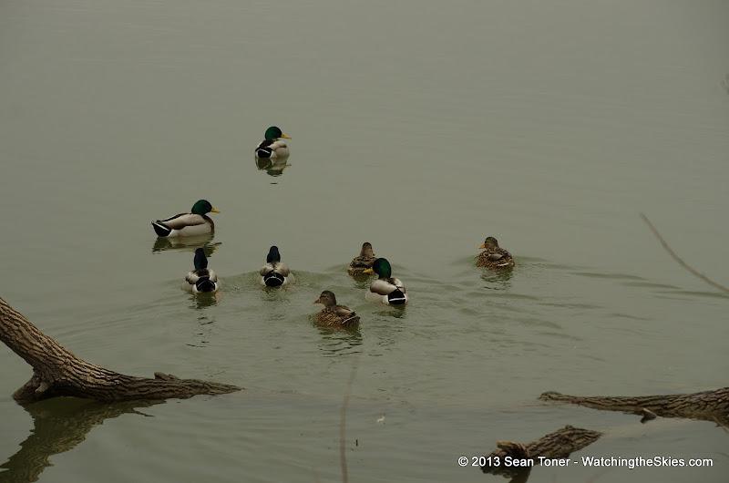01-26-13 White Rock Lake - IMGP4331.JPG