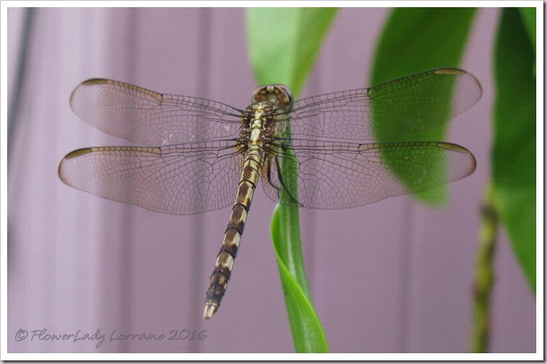 10-13-dragonfly2