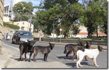 Cani randagi a Napoli
