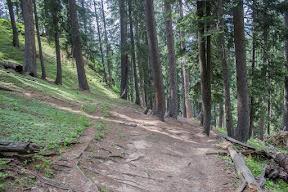 The trek passes through the beautiful dense pine jungle