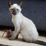 Charlies Kitten 2 - Rehomed Portugal