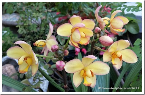 01-09-grnd-orchids