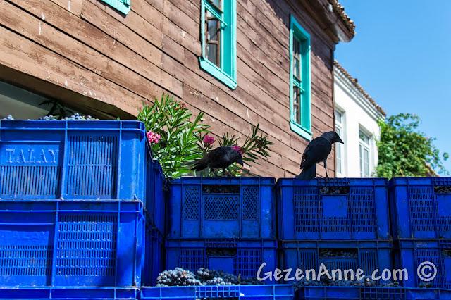 Bozcaada'da şarap olmayı bekleyen üzüm kasaları