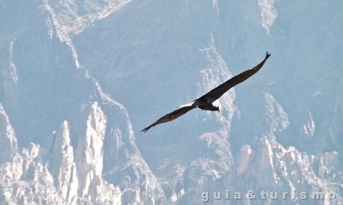 Valle do Condor - Peru