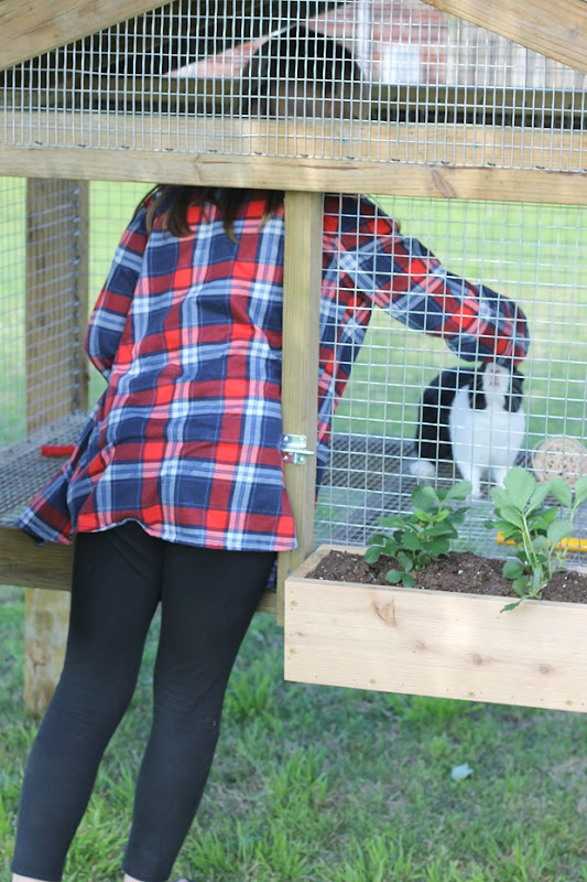 bunny hutch with lots of room