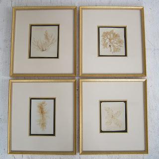 Framed Antique Herbarium Lot