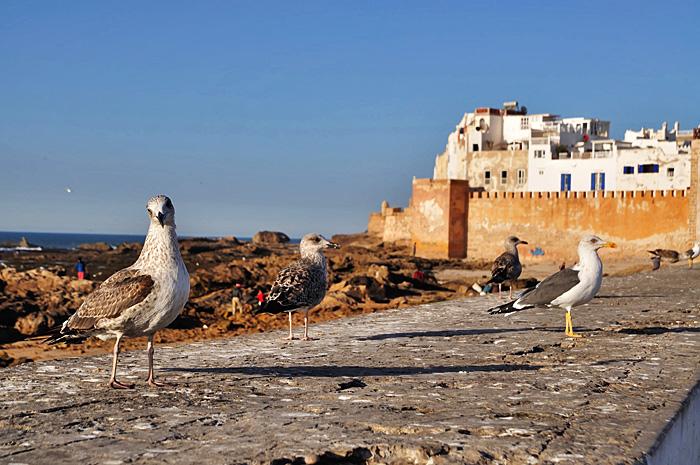 Essaouira14.JPG