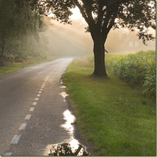 dutch-country-road-farm-early-sun after rain
