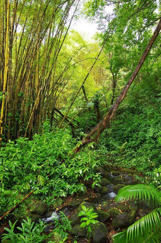 06-23-13 Big Island Waterfalls, Travel to Kauai - IMGP8839.JPG