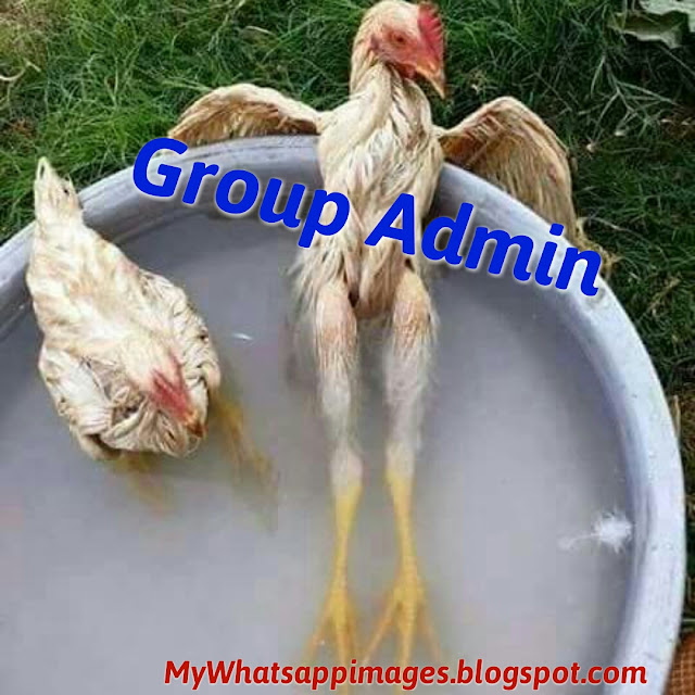 Whatsapp Group Admin Jokes Images