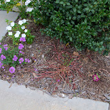 Gardening 2012 - 115_1427.JPG