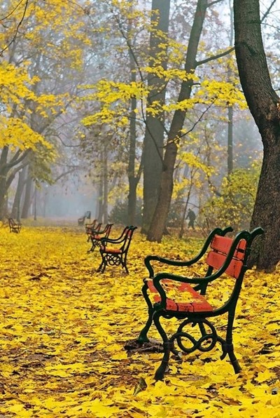 benches in autumn