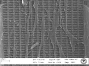 HS68 Fibroblasts Showing Cell Guidance Behavior on Micropatterned Surfaces