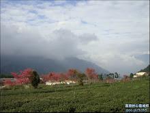 草坪頭玉山觀光茶園自然風光
