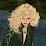 Leora Jacobus's profile photo