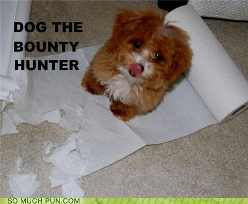 photo of a small dog and a ripped-up roll of bounty paper towels...dog, the bounty hunter