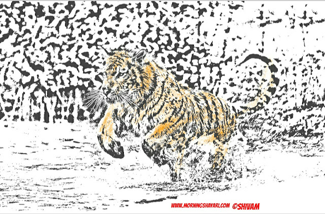 Tiger Image, Jungle king, wildlife photography, Nature Sketches, forest, Animal Kingdom, forest, Pond, Trees, hunting