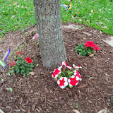 Gardening 2014 - 116_1256.JPG