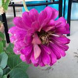 Gardening 2011 - 100_0143.JPG