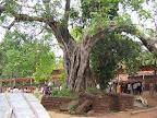 Naga Saanniddhya