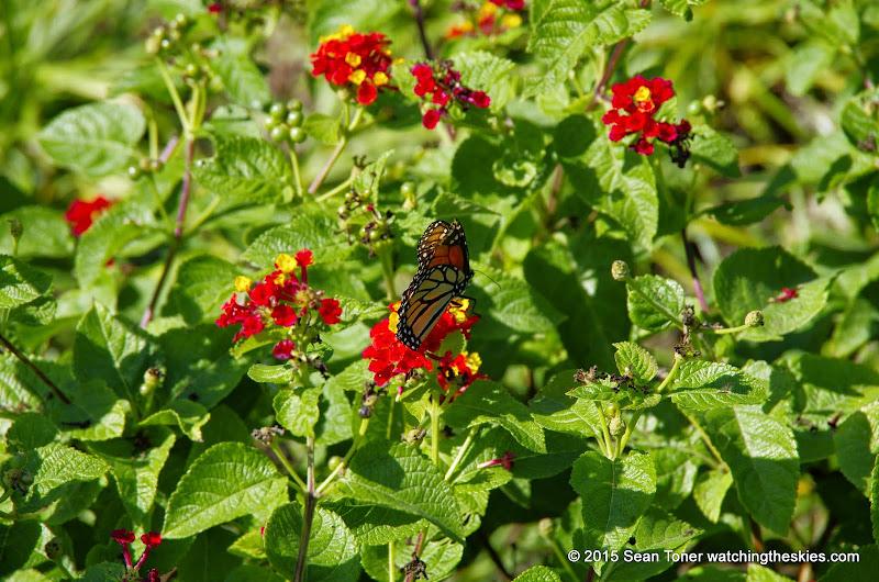 10-26-14 Dallas Arboretum - _IGP4330.JPG