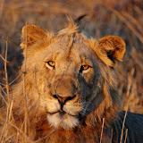 The Kruger (Shishangeni)