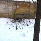 Кормушки для птичек 003.jpg