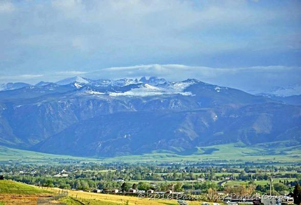 Bighorns Above Sheridan