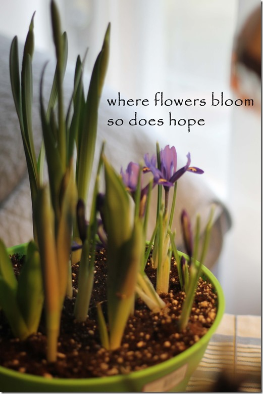 bloom quote