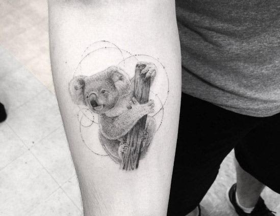 Esta koala