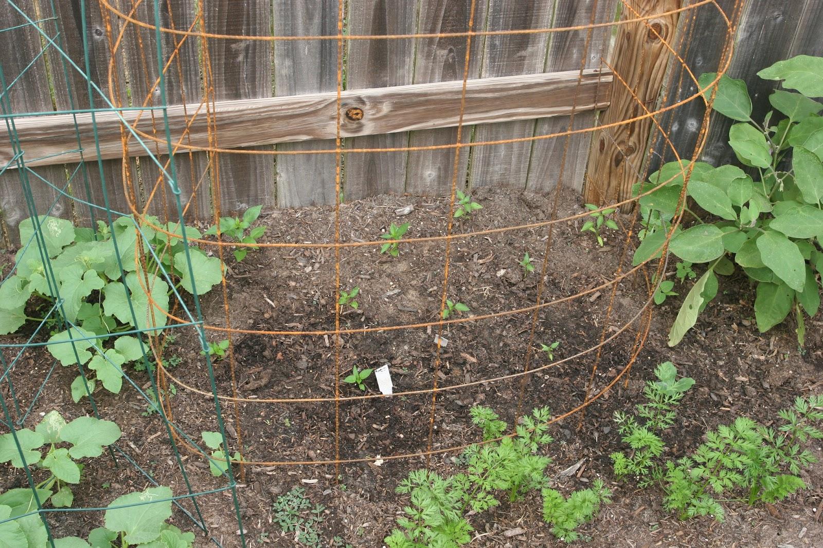 Gardening 2012 - IMG_3294.JPG