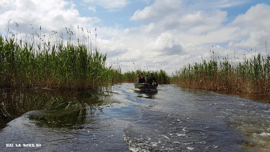 barca delta neajlovului