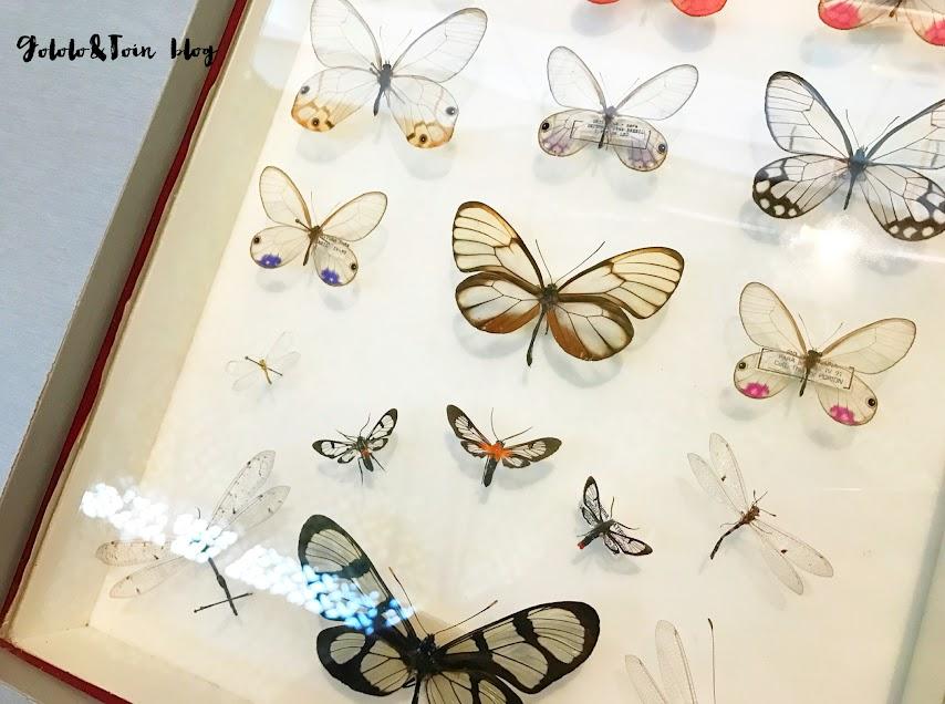 centro-naturaleza-insectpark-ocio-familia
